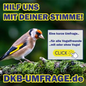 DKB Umfrage 10
