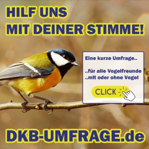 DKB Umfrage 11