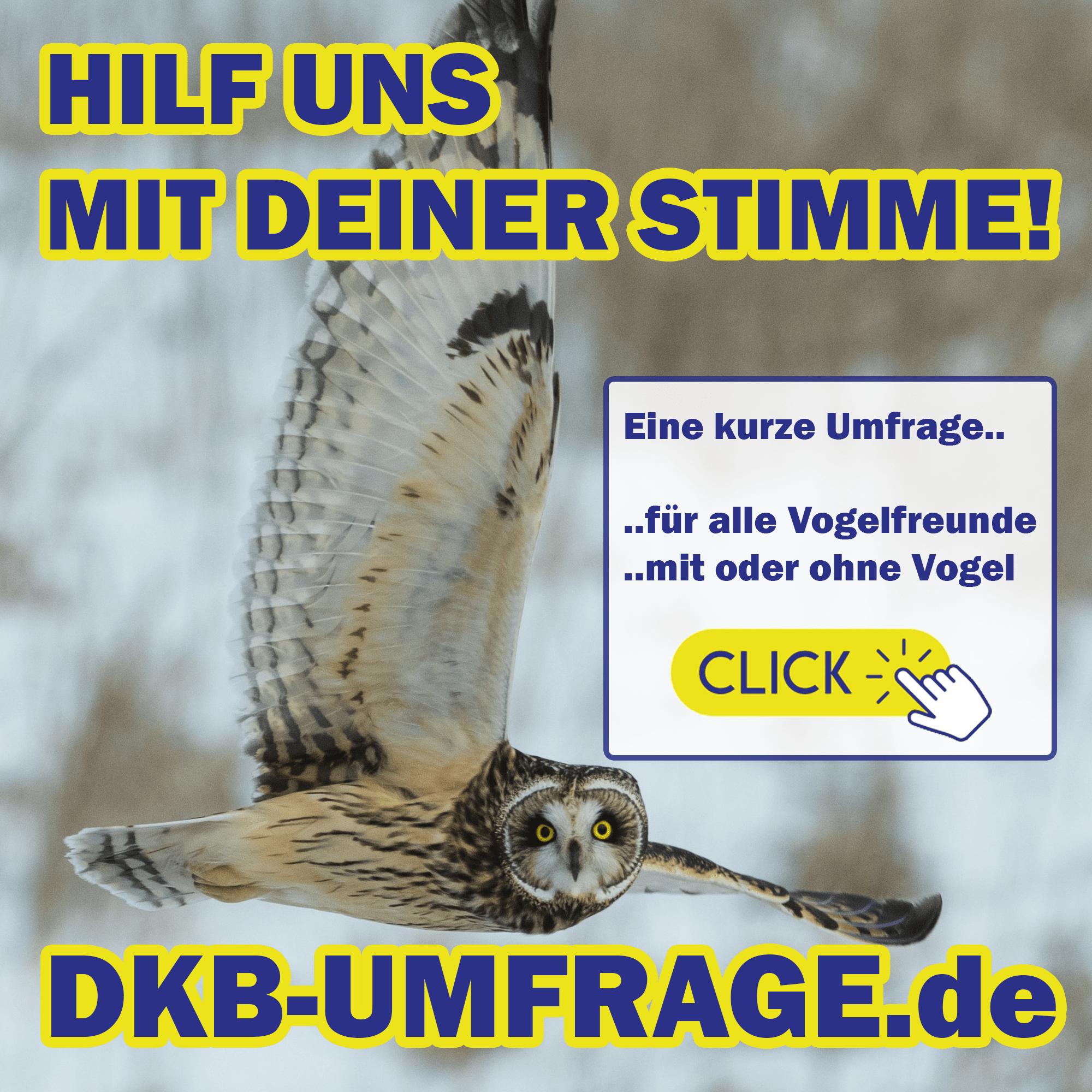 DKB Umfrage 12