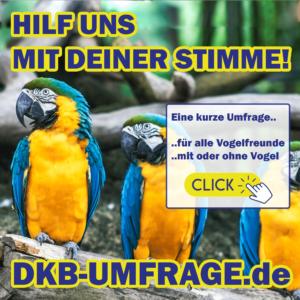 DKB Umfrage 13