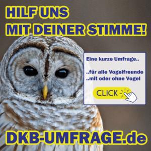 DKB Umfrage 14