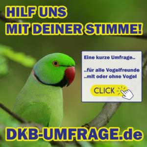 DKB Umfrage 15