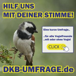 DKB Umfrage 16