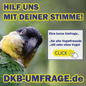 DKB Umfrage 17