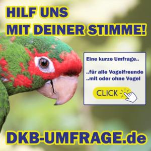 DKB Umfrage 18