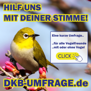 DKB Umfrage 19