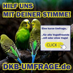 DKB Umfrage 2