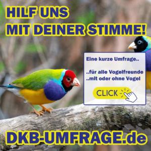 DKB Umfrage 20