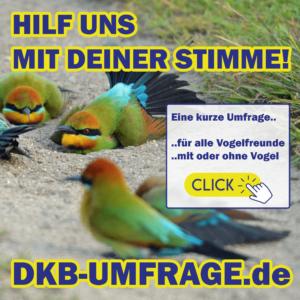 DKB Umfrage 21