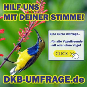 DKB Umfrage 24