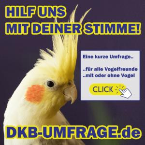 DKB Umfrage 25