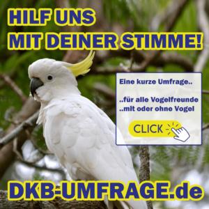 DKB Umfrage 26
