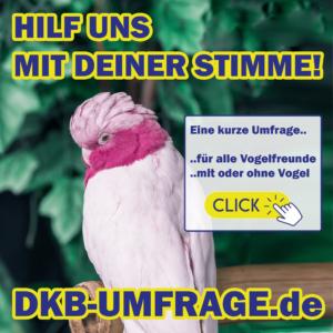 DKB Umfrage 27