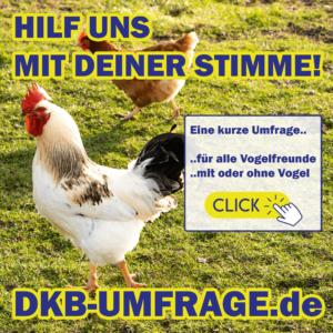 DKB Umfrage 29