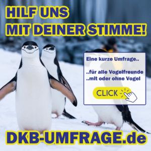 DKB Umfrage 30