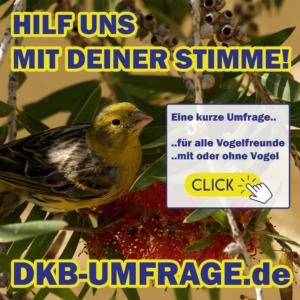 DKB Umfrage 4