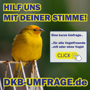 DKB Umfrage 5