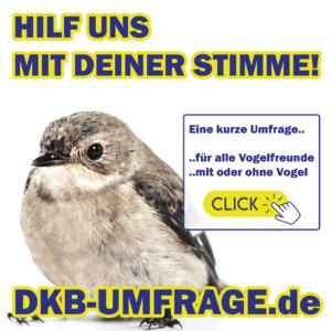 DKB Umfrage 6
