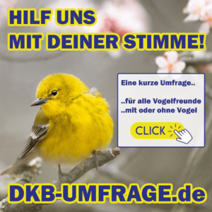 DKB Umfrage 7