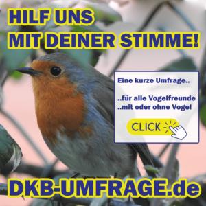 DKB Umfrage 8