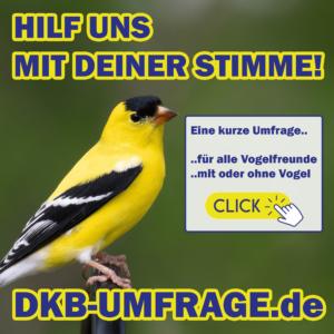 DKB Umfrage 9